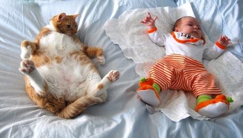 babycat